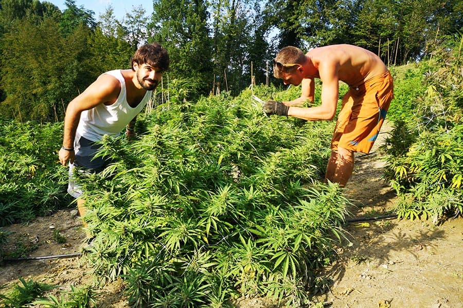 everweed-azienda-agricola-3