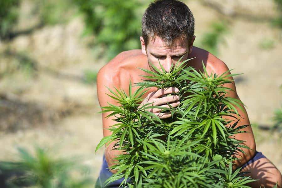 everweed-azienda-agricola-4