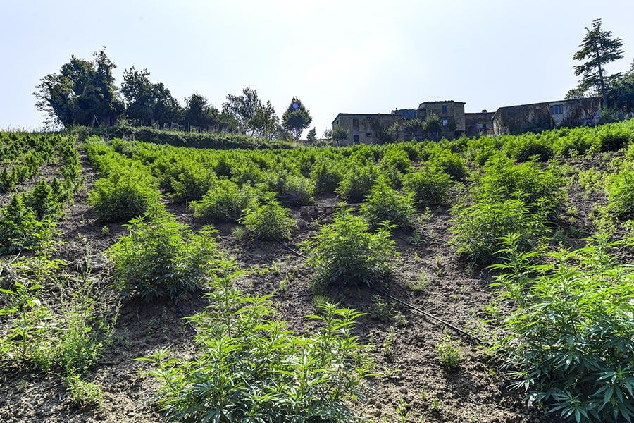 everweed-azienda-agricola-5