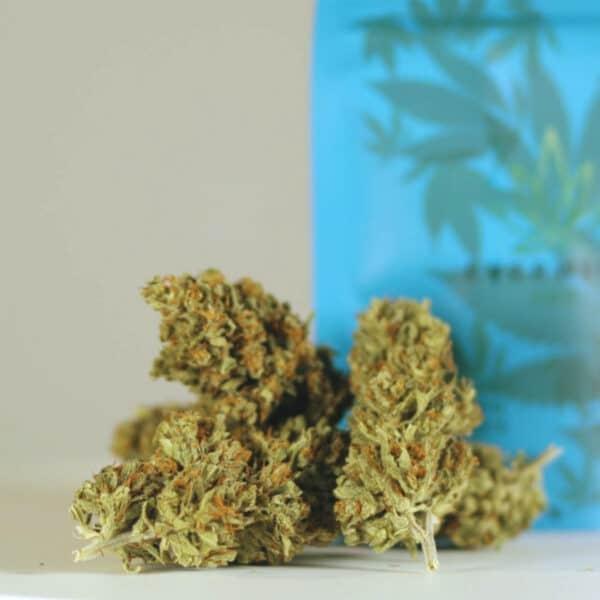 Cannabis Light CBD Everweed - White Shark
