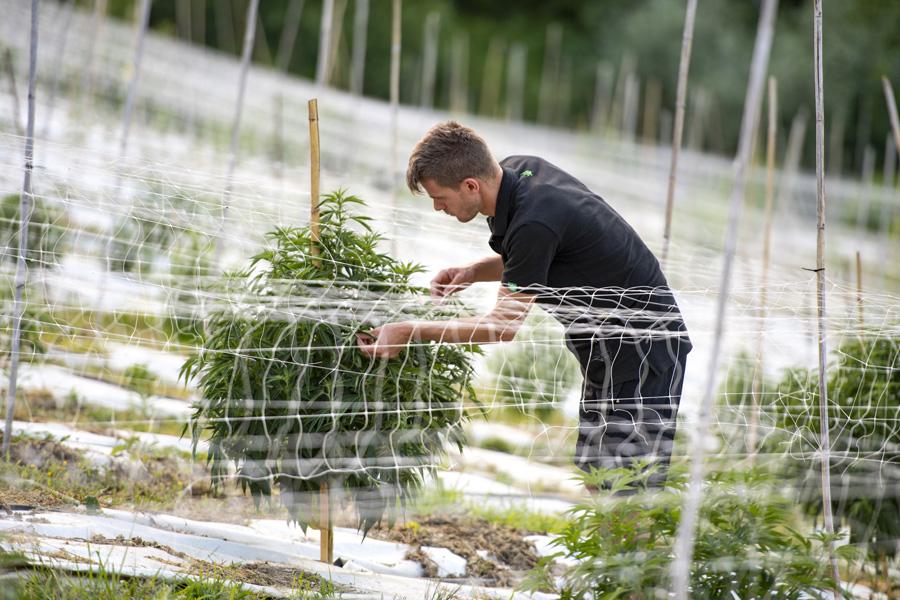Azienda Agricola Cannabis Light Everweed