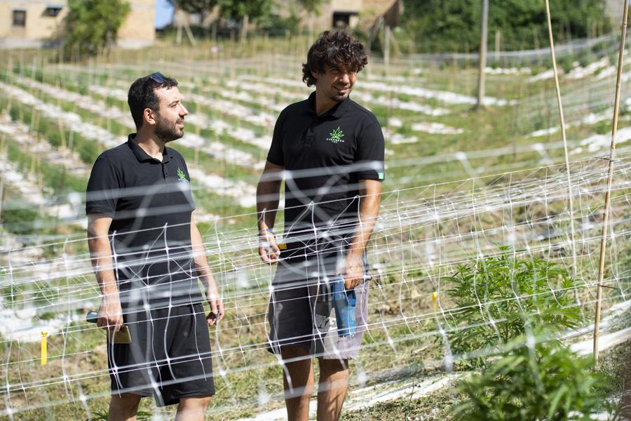 Azienda Agricola Cannabis Legale Everweed