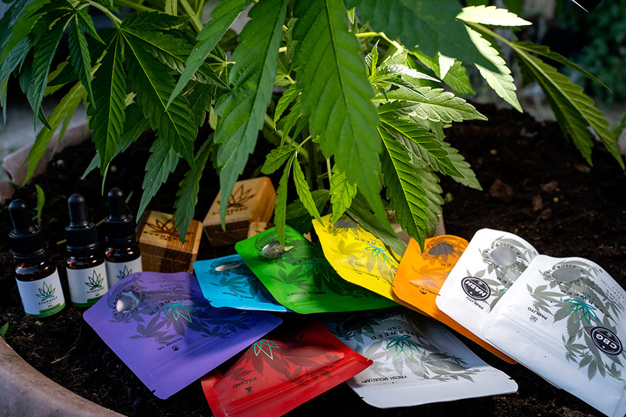 Punti Vendita Cannabis Light